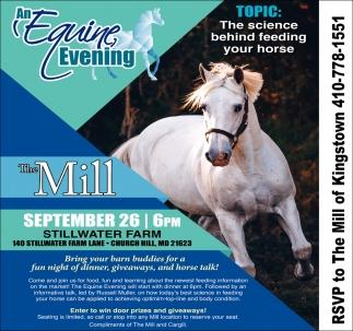 An Equine Evening