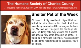 Shelter Pet of the Week