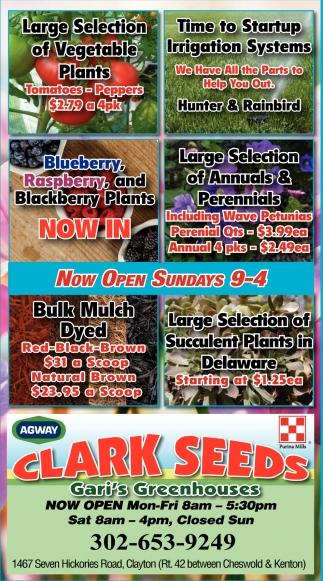 Now Open Sundays 9-4