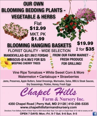 Our Own Bloomming Bedding Plants